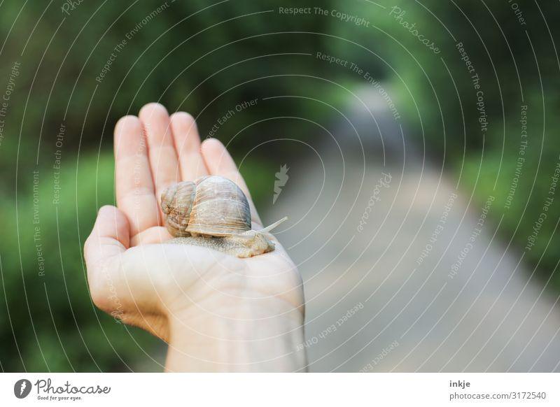 Weinbergschnecke Freizeit & Hobby Hand Frühling Sommer Herbst Wald Fußweg Wildtier Schnecke 1 Tier festhalten authentisch klein nah natürlich grün Tierliebe