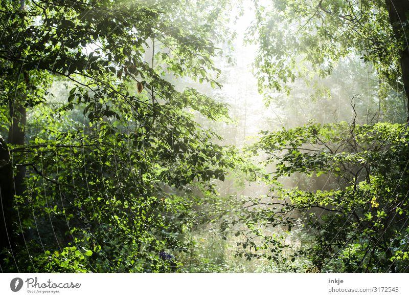 Lichtung Natur Sonne Sonnenlicht Frühling Sommer Schönes Wetter Baum Wald Mischwald Laubwald frisch hell natürlich grün Idylle Waldlichtung durchscheinend Luft