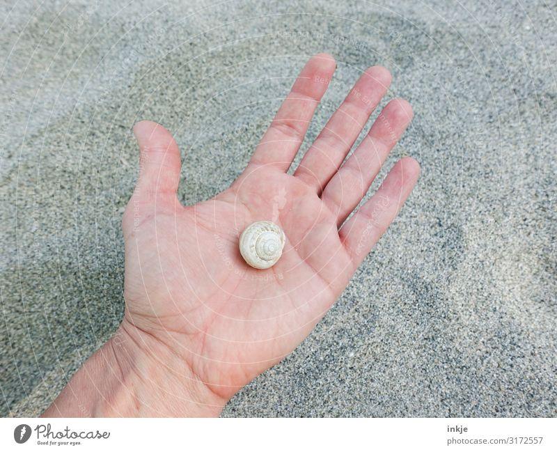 Schneckenhaus Hand Handfläche Sand festhalten authentisch hell klein beige trocken leer Farbfoto Gedeckte Farben Außenaufnahme Nahaufnahme Textfreiraum links
