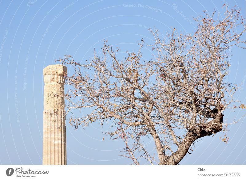 übrig Kunst Kunstwerk Architektur Kultur Antike Umwelt Wolkenloser Himmel Pflanze Baum Lindos Griechenland Ruine Bauwerk Säule Sehenswürdigkeit