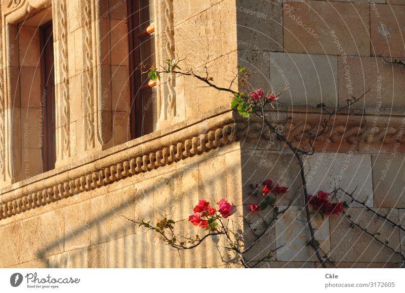 Schmuck Pflanze Stadt schön grün rot Blume Haus Fenster Architektur gelb Wand Gebäude Mauer Stein braun Fassade