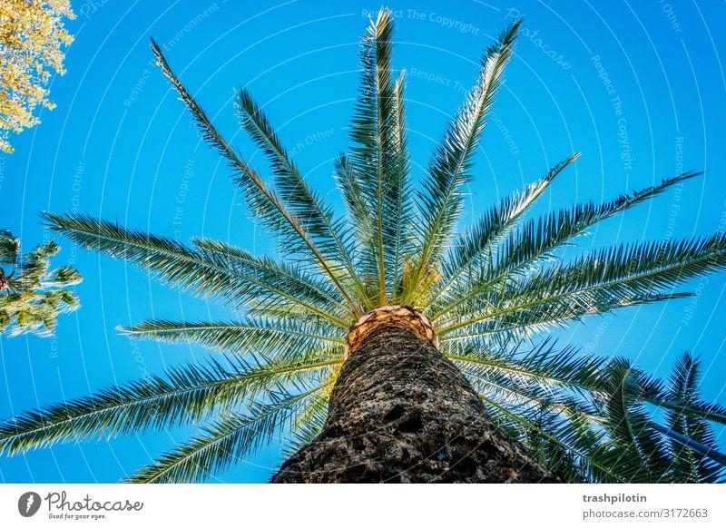Wann wird's mal wieder richtig Sommer Ferien & Urlaub & Reisen Tourismus Ausflug Abenteuer Ferne Freiheit Natur Pflanze Sonnenlicht Wetter Schönes Wetter