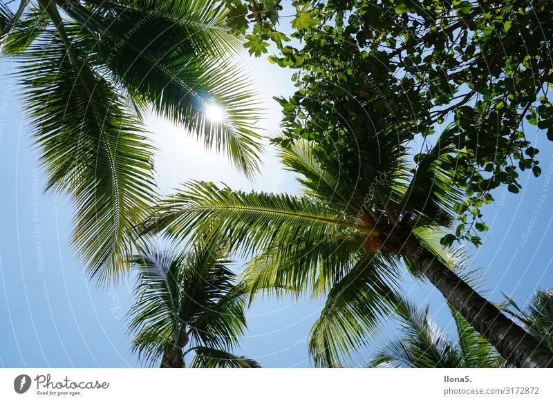 Fernweh Freizeit & Hobby Ferien & Urlaub & Reisen Tourismus Ferne Freiheit Sommer Sommerurlaub Sonne Sonnenbad Strand Meer Insel Wellen Natur Wolkenloser Himmel