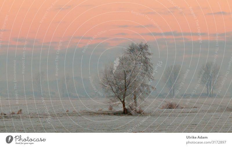 Nebelige Schneelandschaft Wellness Erholung Winter Winterurlaub Tapete Postkarte Weihnachten & Advent Natur Landschaft Klima Eis Frost Schneefall frieren weich
