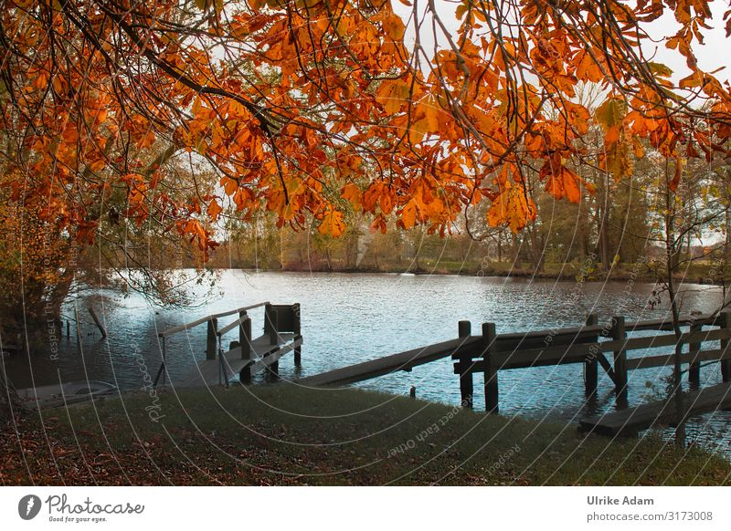 Herbst am Steg Ferien & Urlaub & Reisen Tourismus Ausflug Freiheit wandern Tapete Natur Landschaft Wasser Baum Blatt Herbstlaub Kastanienbaum Moor Sumpf Fluss