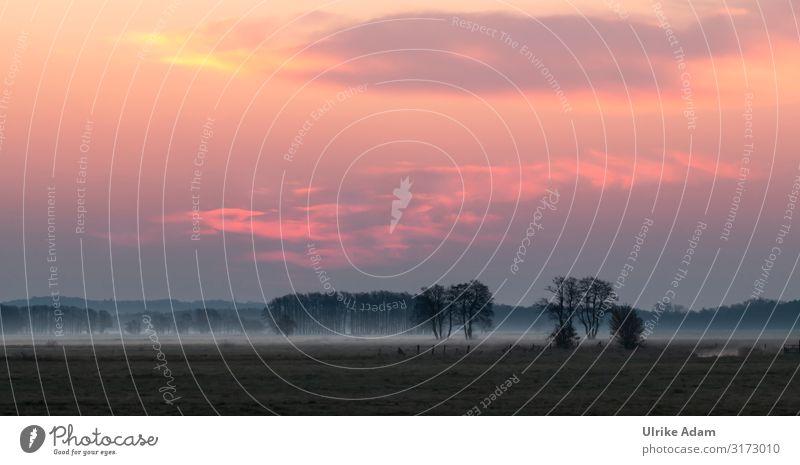 Sonnenaufgang mit Nebel im Teufelsmoor / Osterholz-Scharmbeck Bodennebel Landschaft Menschenleer Umwelt Außenaufnahme Natur Baum Himmel Licht Feld