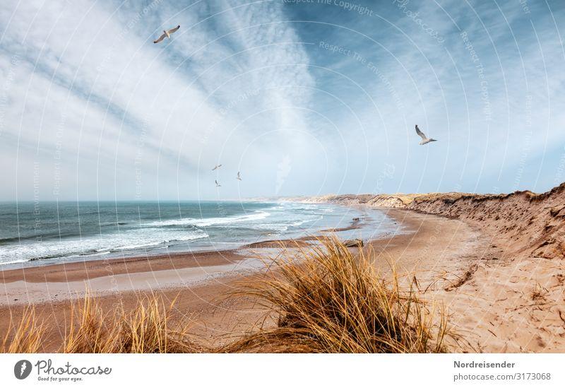Nordsee in Dänemark Ferien & Urlaub & Reisen Freiheit Camping Sommer Sommerurlaub Strand Meer Natur Landschaft Urelemente Sand Wasser Himmel Wolken