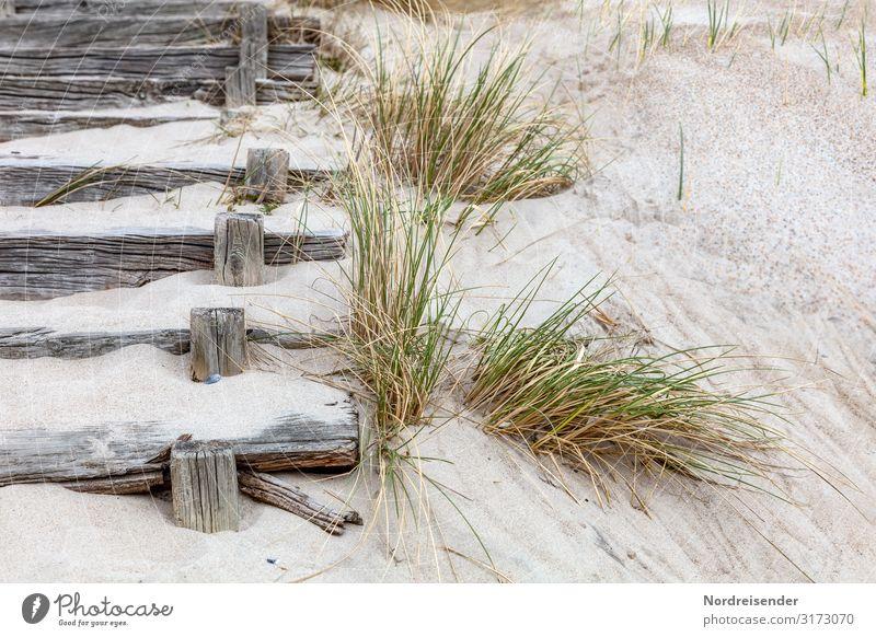 Treppe zum Strand Ferien & Urlaub & Reisen Tourismus Meer Natur Landschaft Sand Sommer Gras Küste Nordsee Ostsee Wege & Pfade Holz alt maritim retro Holztreppe