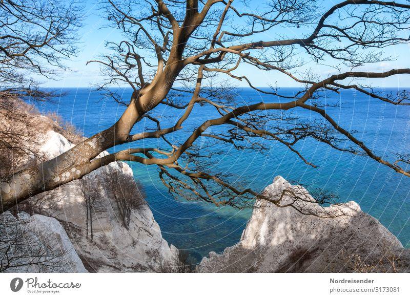 Møns Klint Ferien & Urlaub & Reisen Tourismus Ausflug Meer Natur Landschaft Urelemente Wasser Wolkenloser Himmel Frühling Herbst Schönes Wetter Baum Küste