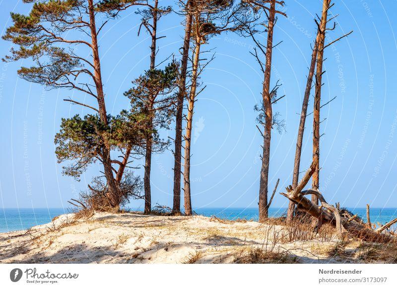 Weststrand Ferien & Urlaub & Reisen Natur Sommer Wasser Landschaft Sonne Baum Meer Strand Tourismus Sand Insel Schönes Wetter Sommerurlaub Sehnsucht Ostsee