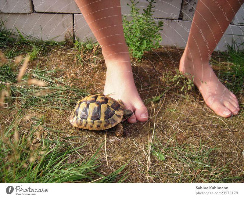 Schildkröte Mensch feminin Junge Frau Jugendliche Fuß 1 18-30 Jahre Erwachsene Sommer Schönes Wetter Gras Garten Tier Haustier Schildkrötenpanzer beobachten