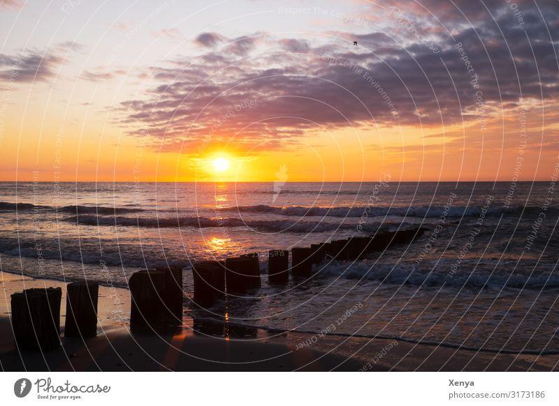 Sonnenuntergang an der niederländischen Nordsee Sand Wolken Sonnenaufgang Wasser gelb grau orange ruhig Meer Strand Abendsonne Wellenbrecher