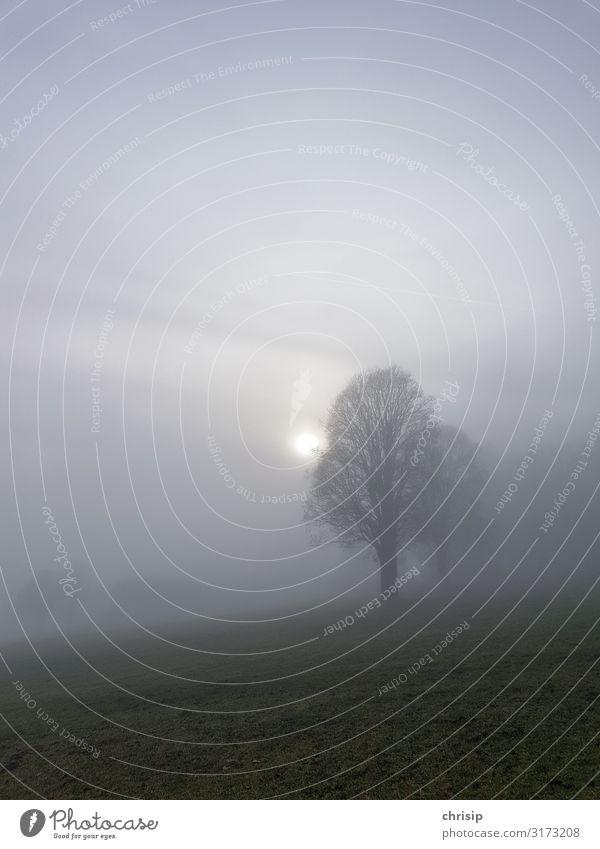 Baum im Nebel Natur Landschaft Wolken Sonne Wiese dunkel fantastisch kalt natürlich trist Romantik dankbar Hoffnung Traurigkeit Sorge Trauer Endzeitstimmung