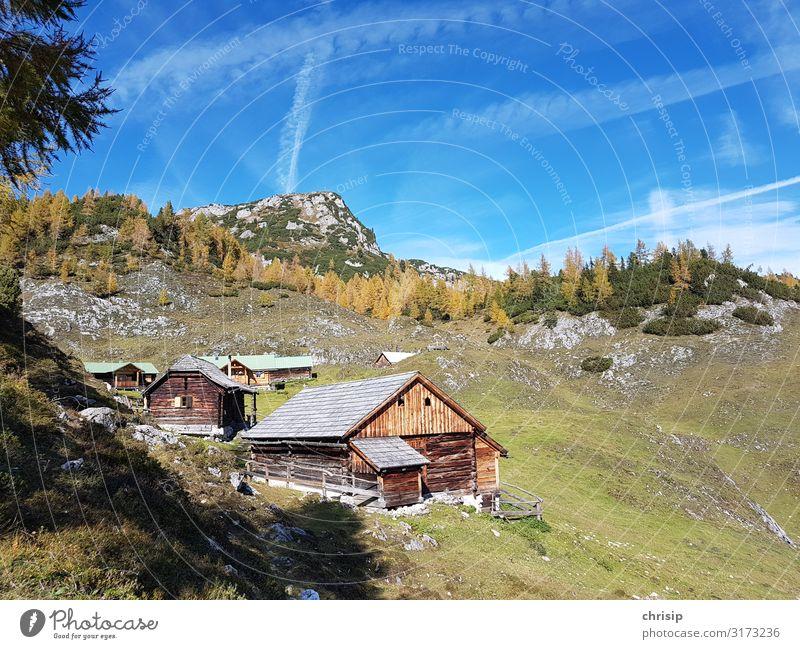 auf der Alm Umwelt Natur Landschaft Himmel Herbst Schönes Wetter Baum Lärche Alpen Berge u. Gebirge Kufstein Gipfel Freundlichkeit Wärme Gefühle Stimmung