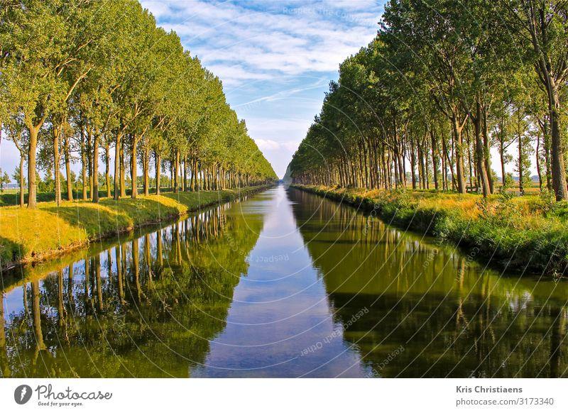 Reflexionen Natur Landschaft Pflanze Wasser Frühling Sommer Baum Bach Fluss Holz blau grün Reflexion & Spiegelung Kanal Leopold-Kanal Belgien Landschaftspflege