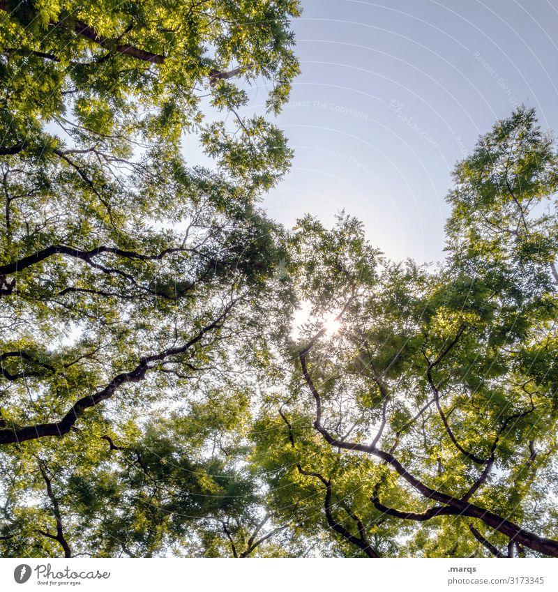 Show me the sunshine Natur Wolkenloser Himmel Sommer Schönes Wetter Laubbaum Ast Blatt atmen Erholung Stimmung Gesundheit vitalisierend Farbfoto Außenaufnahme