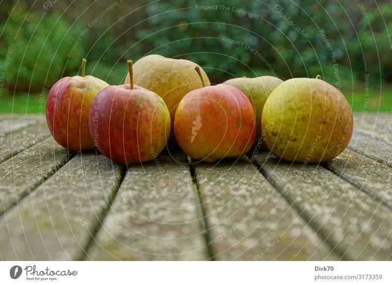 Erntezeit! Lebensmittel Frucht Apfel Ernährung Bioprodukte Vegetarische Ernährung Snack Gesundheit Gesunde Ernährung Garten Umwelt Natur Herbst Obstgarten