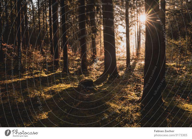 Sonnenstrahlen im Wald Fahrradfahren Natur Landschaft Erde Sonnenaufgang Sonnenuntergang Sonnenlicht Herbst Schönes Wetter Nebel Pflanze Baum Seeufer Grüntensee