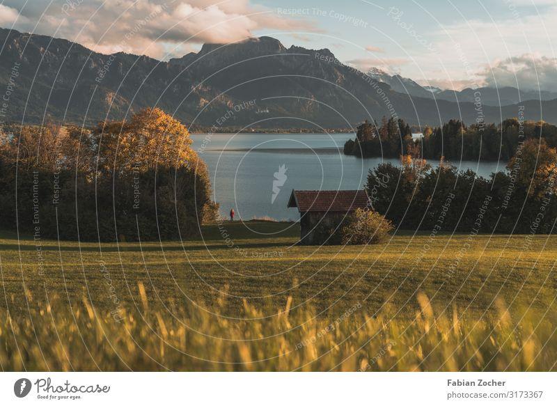 Sonnenuntergang am Forggensee Berge u. Gebirge Natur Landschaft Erde Wasser Wolken Sonnenaufgang Herbst schlechtes Wetter Pflanze Baum Alpen Tegelberg Gipfel