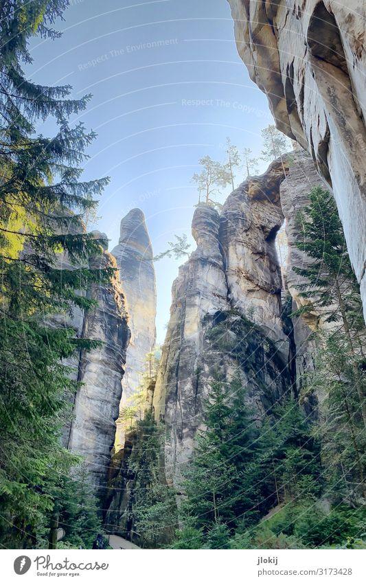 Adršpach Natur Sommer Landschaft Baum Wald Berge u. Gebirge Tourismus Felsen wandern Schönes Wetter Urelemente Klettern Bergsteigen Naturschutzgebiet Sandstein