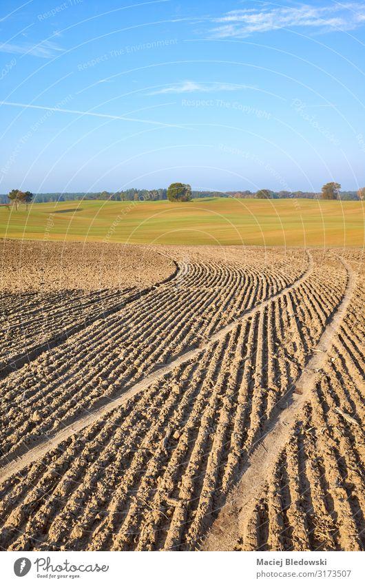 Blick auf ein gepflügtes Feld in warmer Morgensonne Landwirtschaft Forstwirtschaft Industrie Natur Landschaft Erde Himmel Horizont Herbst Wiese Furche