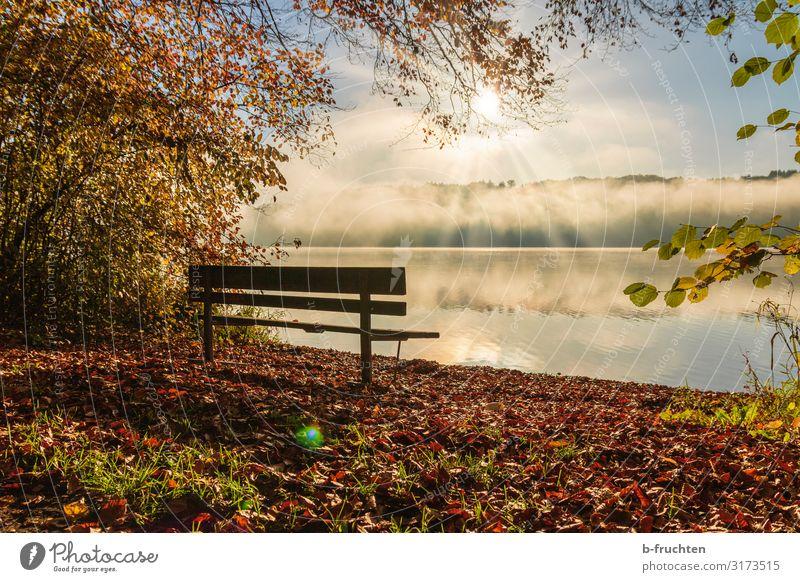 Parkbank am Seeufer Wohlgefühl Erholung ruhig Ferien & Urlaub & Reisen wandern Umwelt Natur Sonnenlicht Herbst Schönes Wetter Nebel genießen träumen warten