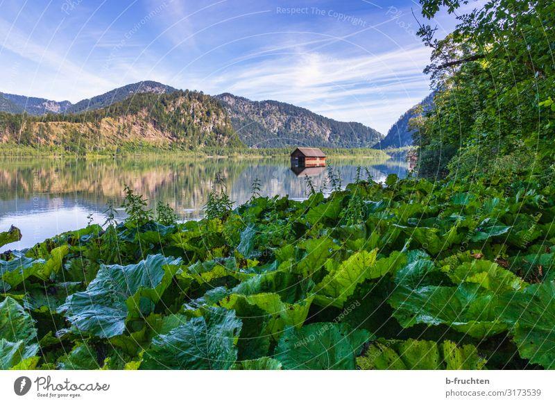 Kleiner Gebirgssee im Salzkammergut harmonisch Erholung Ferien & Urlaub & Reisen Tourismus Sommer Berge u. Gebirge wandern Natur Landschaft Pflanze Wald Alpen