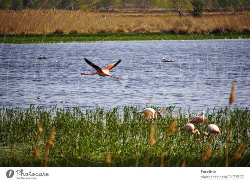 Zwillbrocker Venn Umwelt Natur Landschaft Pflanze Tier Urelemente Wasser Frühling Schönes Wetter Gras Wildpflanze Küste Seeufer Moor Sumpf Vogel Flügel