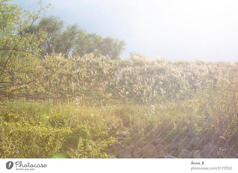 Deich Ferien & Urlaub & Reisen Tourismus Ausflug Freiheit Expedition Sommer Sonne Gartenarbeit Landschaft Pflanze Sonnenlicht Schönes Wetter Baum Sträucher