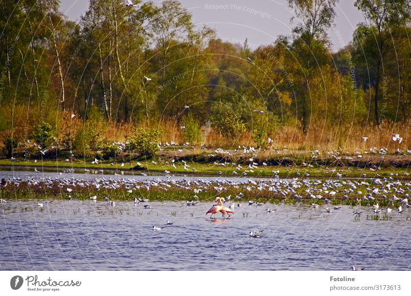 Zwillbrocker Venn II Umwelt Natur Landschaft Pflanze Tier Urelemente Wasser Himmel Wolkenloser Himmel Frühling Baum Küste Seeufer Moor Sumpf Wildtier Vogel