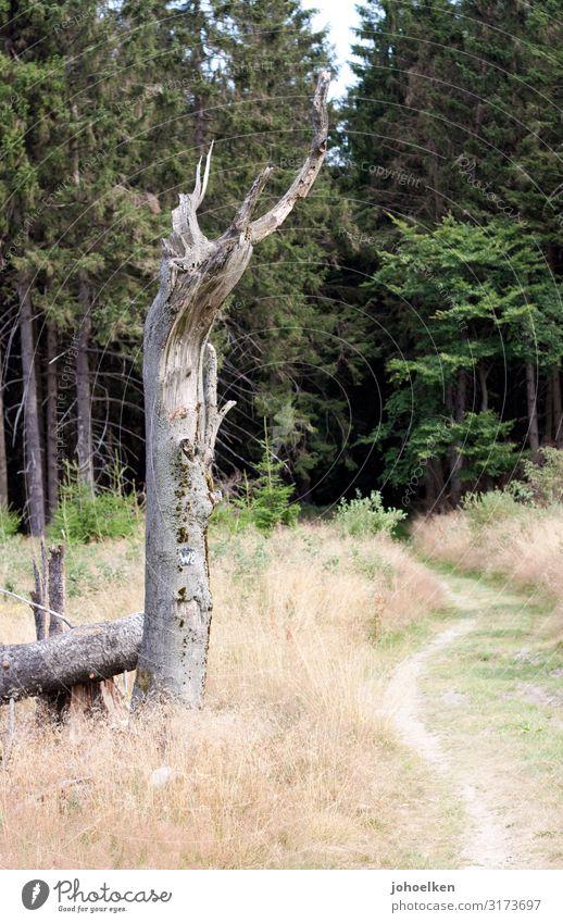Wanderlust Natur Landschaft Baum Wald Wege & Pfade wandern Feld Idylle stehen Vergänglichkeit Fußweg Nadelwald Baumstumpf Mittelgebirge Sauerland