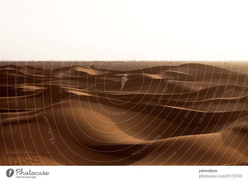 Sandmeer Abenteuer Safari Expedition Landschaft Sonnenlicht Klimawandel Dürre Wellen Wüste Sahara Ferien & Urlaub & Reisen dehydrieren groß Unendlichkeit