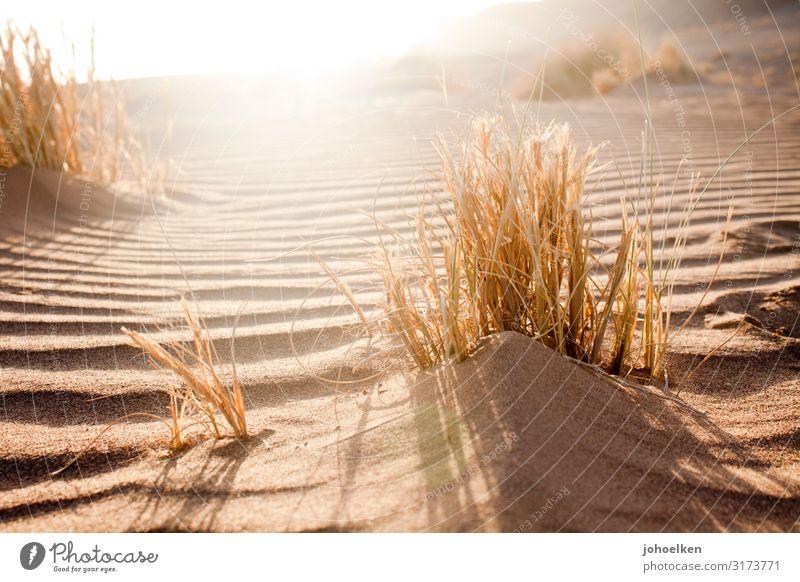 Wüstensonne Ferien & Urlaub & Reisen Natur Sommer Landschaft Sonne Erholung ruhig Strand Wärme Gras Sand hell Linie leuchten gold Wellen