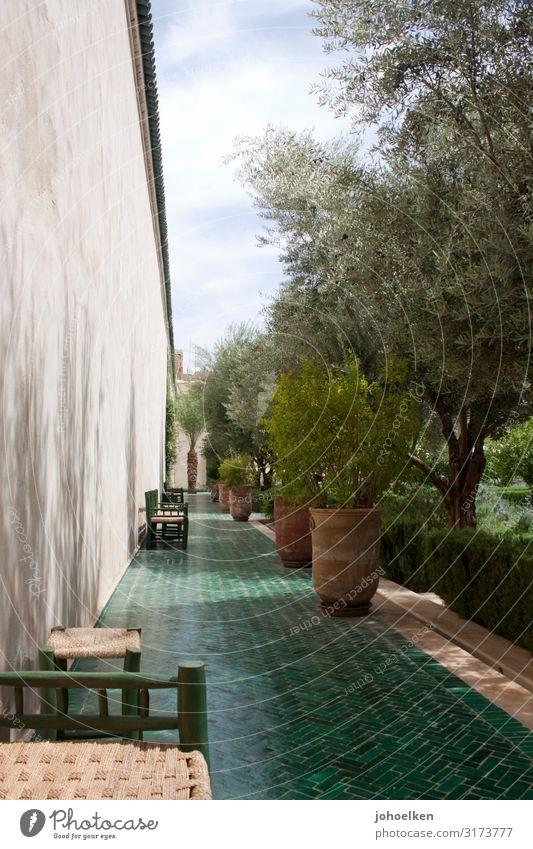Mediterraner Garten grün islam garten terracotta Außenaufnahme Sonnenlicht Schatten mediterran Oliven Olivenbaum Fliesen u. Kacheln warme jahreszeit Sommer