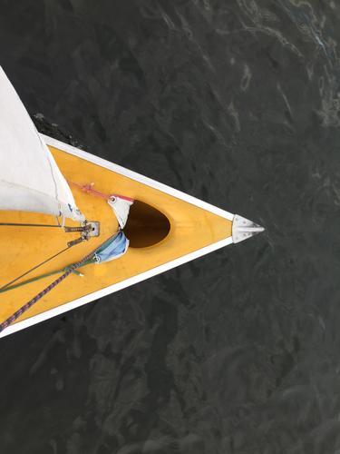 Gelber Segelboot Bug Lifestyle Freizeit & Hobby Segeln Abenteuer Sommer Wellen See Sport Wassersport Wasserfahrzeug Jacht fahren Fröhlichkeit maritim sportlich