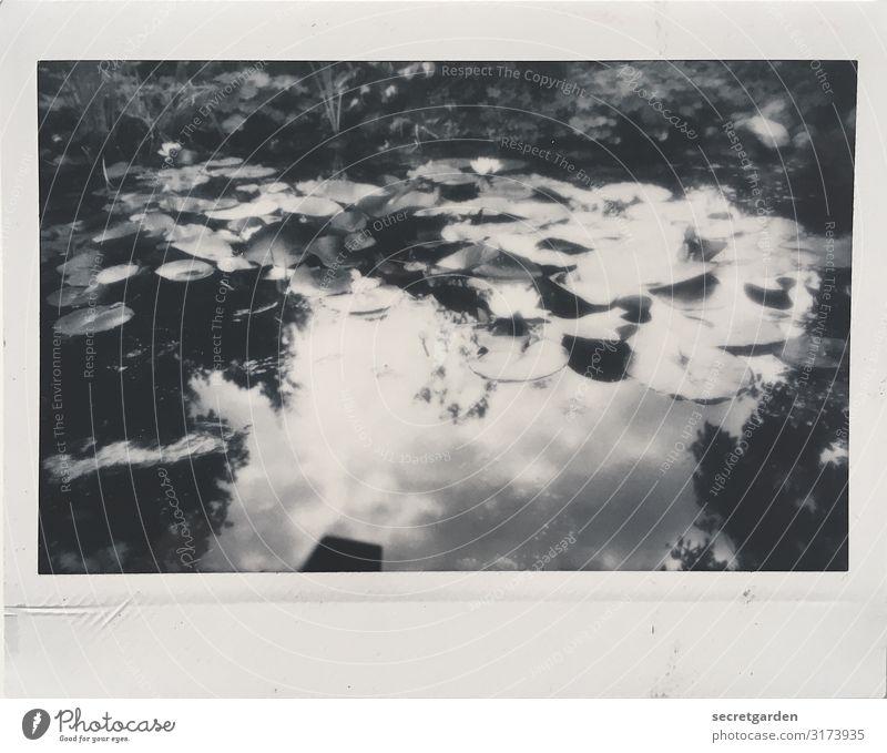 reflektierte Wolken. Umwelt Natur Landschaft Pflanze Tier Wasser Sommer Schönes Wetter Seerosen Seerosenteich Garten Park Teich glänzend Erholung milchig