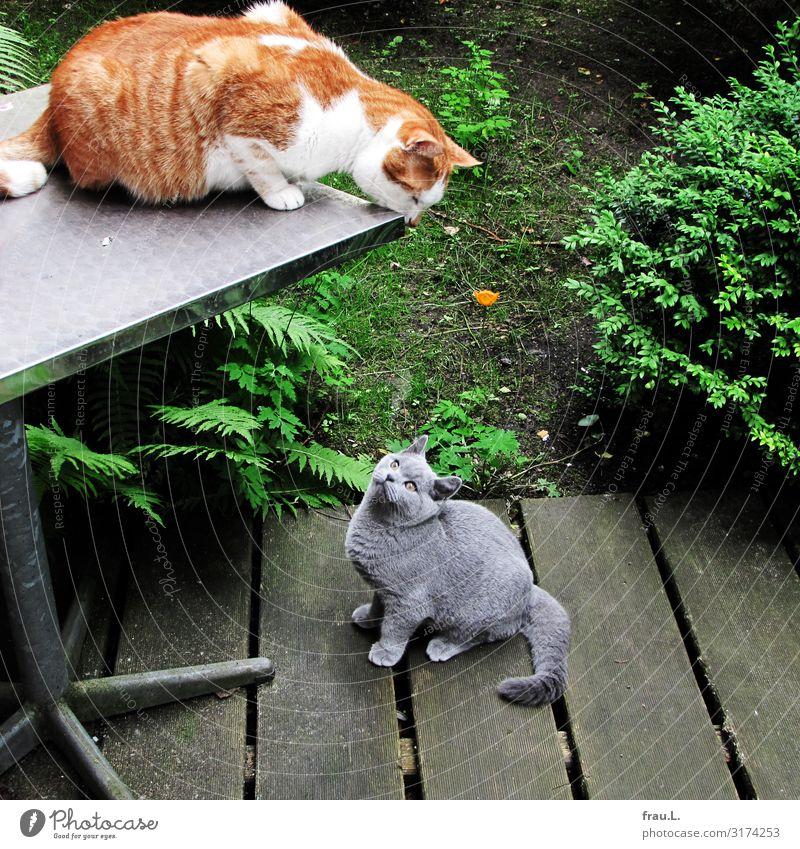 Kontakt Pflanze Tier Garten Haustier Katze 2 Tierpaar Tierjunges sprechen Blick sitzen Freundlichkeit schön Freude Sympathie Hauskatze Revier Farbfoto Tag