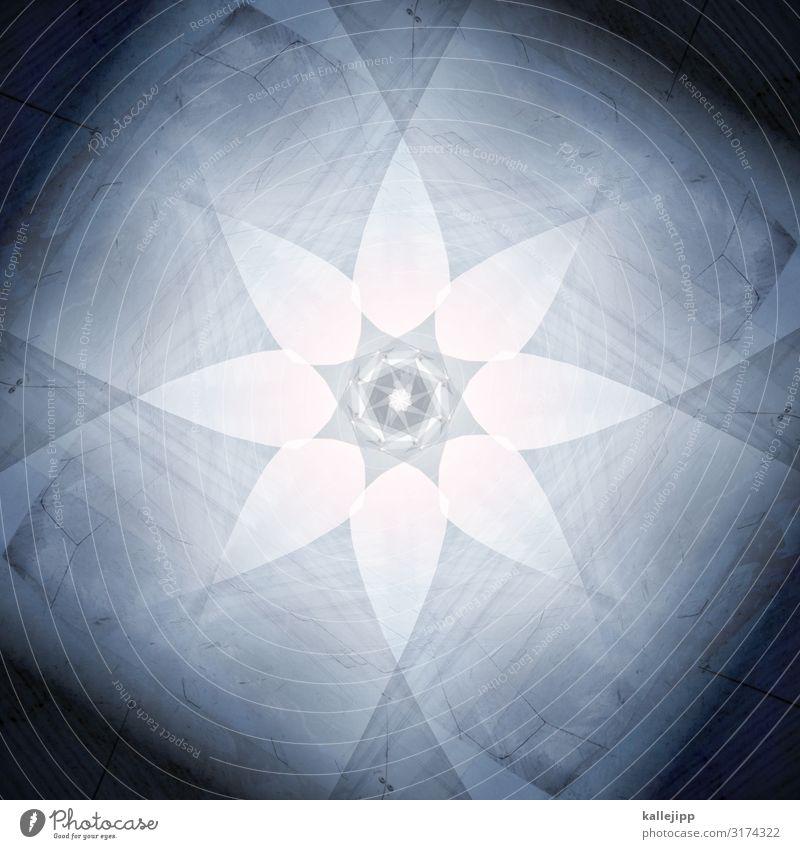 *6 Weihnachten & Advent Stadt Blume Religion & Glaube Berlin Freiheit Stern (Symbol) Spitze Dach Frieden Mitte Yoga Gott Christentum achtsam