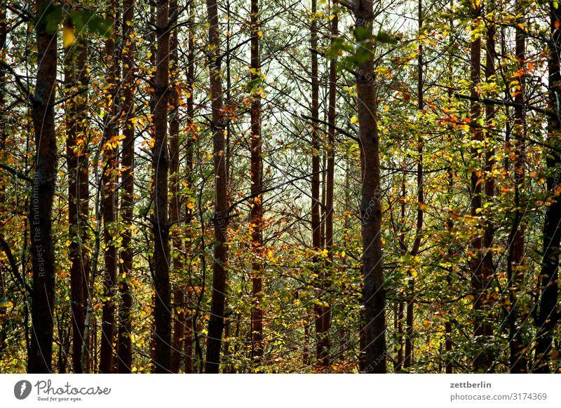 Wald Berge u. Gebirge Hügel Elbsandsteingebirge Erholung Ferien & Urlaub & Reisen Herbst Landschaft Laubwald Sächsische Schweiz wandern Baumstamm Ast Zweig