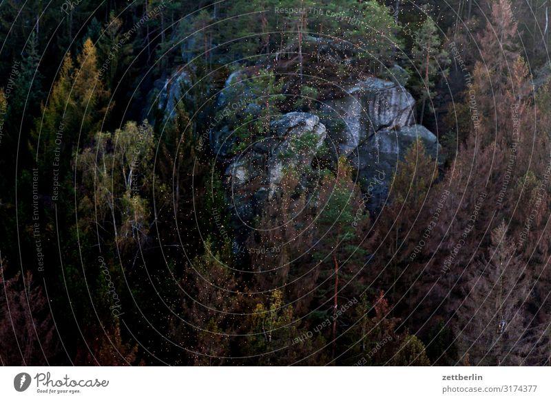 Fliegen über dem Polenztal Berge u. Gebirge Elbsandsteingebirge Erholung Felsen Ferien & Urlaub & Reisen Reisefotografie Herbst hohnstein Hügel Kleinstadt