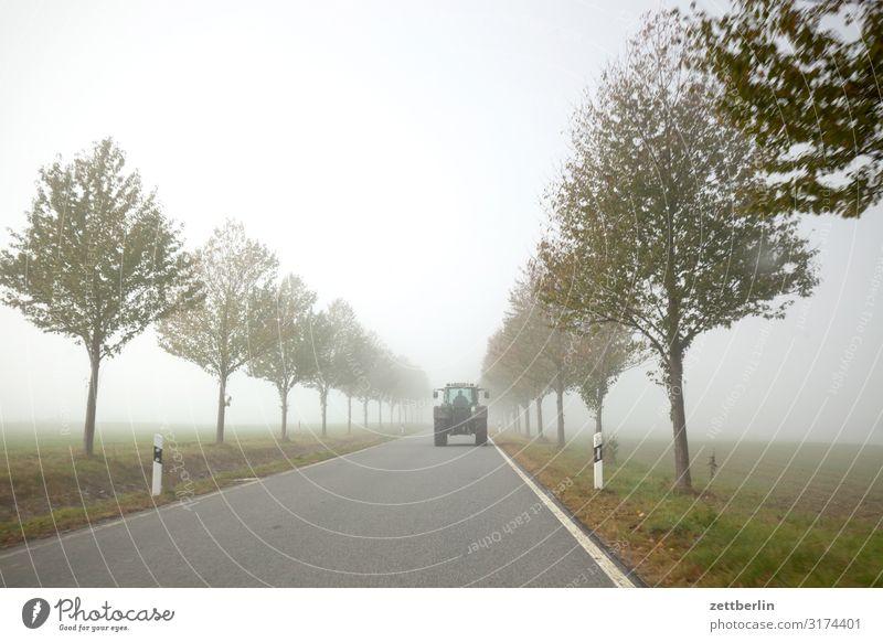 Trecker im Nebel Allee Dunst gerade geradeaus Herbst Herbstfärbung Landschaft Landstraße Menschenleer Morgen Perspektive Ferne Straße Textfreiraum Traktor