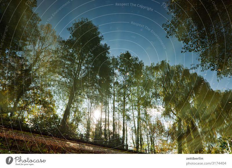 Hafen Lübben Fluss Herbst Landschaft Menschenleer Natur See Sonne Spiegelbild Reflexion & Spiegelung Teich Textfreiraum Seeufer Flussufer Wasser