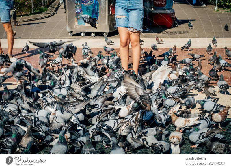 Tauben Meer Barcelona Spanien Europa Stadtzentrum Tourismus Städtereise Farbfoto Außenaufnahme Tag Sightseeing Urlaub Taubenkot füttern füttern verboten Tourist