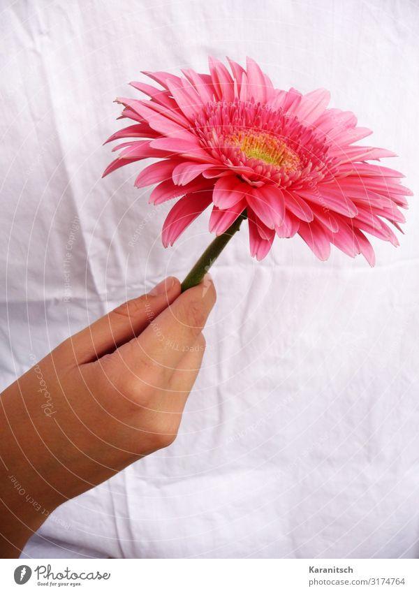 ich denk an dich Feste & Feiern Valentinstag Muttertag Hochzeit Geburtstag Hand Natur Pflanze Blume Blüte Topfpflanze Blühend Duft ästhetisch elegant
