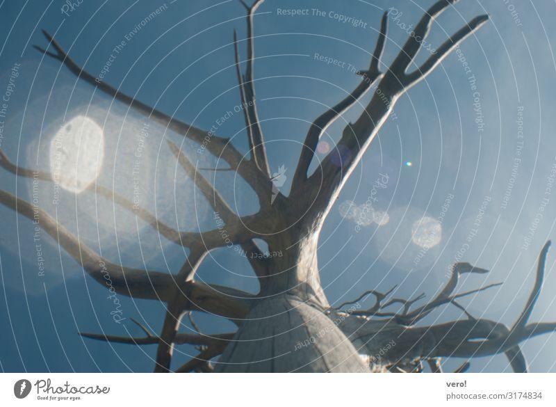 Baumwurzel Himmel Sonnenlicht Sommer Schönes Wetter Alpen Holz stehen alt außergewöhnlich elegant groß schön natürlich rund dünn stark unten wild blau braun