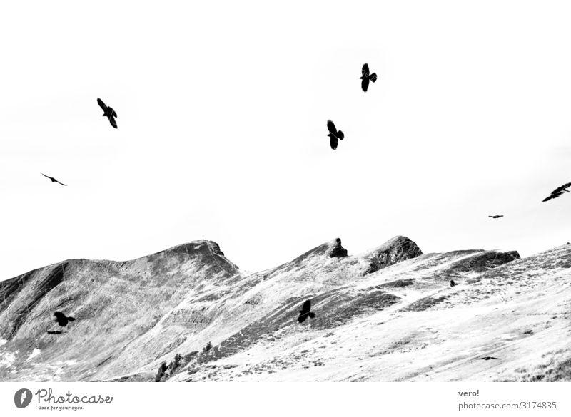 Sie fliegen davon Freiheit wandern Landschaft Himmel Felsen Alpen Vogel Schwarm Bewegung genießen authentisch einfach elegant frei Zusammensein Unendlichkeit