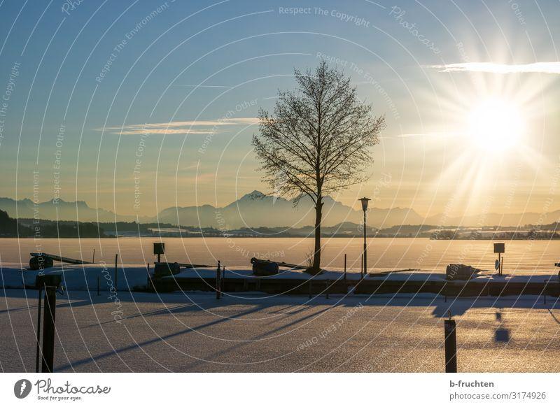 gefrorener See bei Sonnenuntergang Weihnachten & Advent Natur Landschaft Sonnenlicht Winter Schönes Wetter Eis Frost Schnee Baum Seeufer beobachten genießen