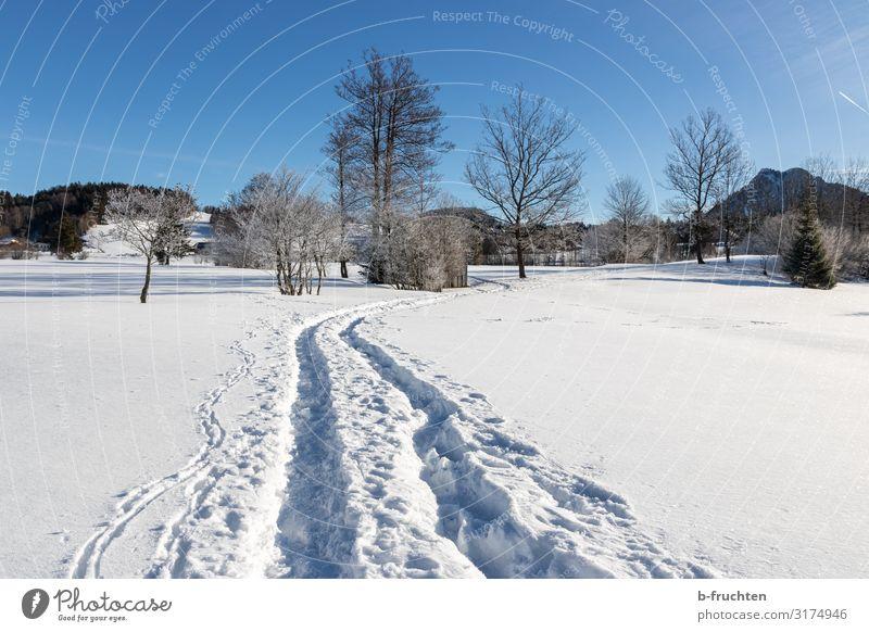 Wege im Schnee Zufriedenheit Erholung Freizeit & Hobby Ferien & Urlaub & Reisen Tourismus Winter wandern Wintersport Joggen Natur Schönes Wetter entdecken