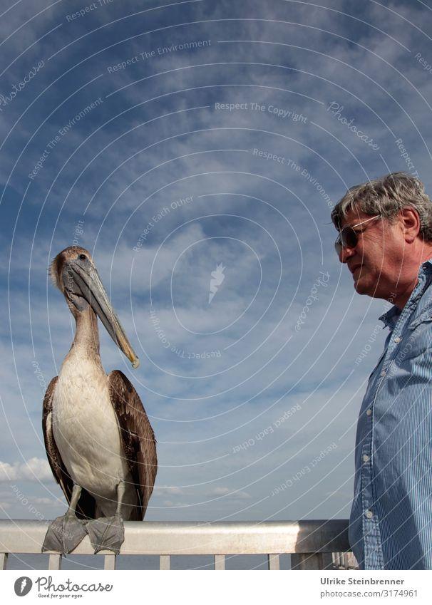 Er redete mit dem Vieh, den Vögeln und den Fischen Mensch Ferien & Urlaub & Reisen Mann Tier Erwachsene Leben sprechen Senior Tourismus Vogel Freundschaft
