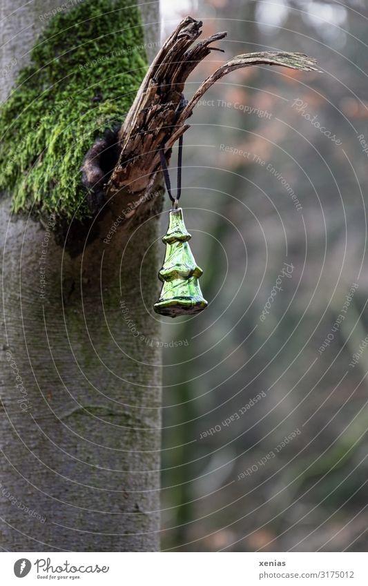 Weihnachtsschmuck im Wald Natur Weihnachten & Advent grün Baum Winter Herbst Umwelt braun Dekoration & Verzierung Park glänzend Zeichen Kitsch Weihnachtsbaum